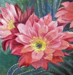 3 Pink Cactus Flower
