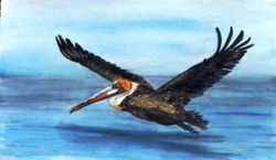 Flying Pelican, Skimming the Surface