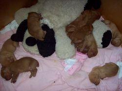 Cuddling with their stuffed dog