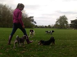 Playing with Diesel, Heston and Marley at the Heath