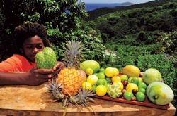 Fruits on Farm