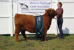 Junior Champion Breeding Heifer STR Symphony