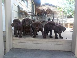 Willow, Ella, Maya, Wilson and Hazel