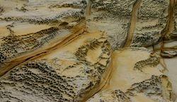 Hawksbury Sandstone