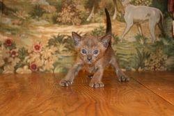 as a tiny kitten