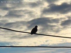 A bird in a sunset scene