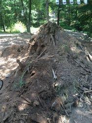 Unprocessed forest soil