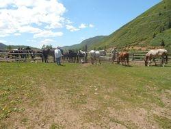 Horses love company