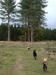 Running in the forest with Toto, Zoey and Mia