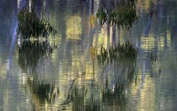 Painterly Reflections
