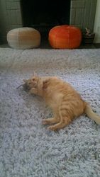 Dally cat