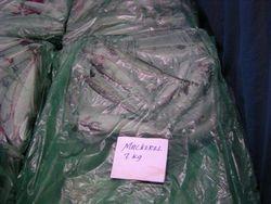Mackerel scomber scombrus Iceland