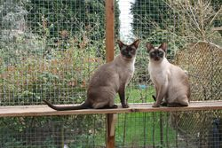 Tinka and Milly - mother and daughter