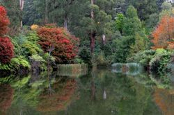 Rhodondendron Gardens #1