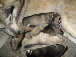 Chena & fur babies