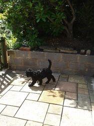 Puppy Visit Crowthorne