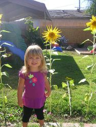 planting and growing sunflowers