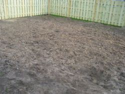 Before - Old Top Soil