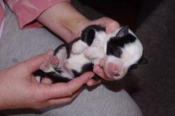 Mischas babies- 22nd July, 2010- 9 babies