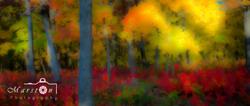Fall Colors #3 Soft