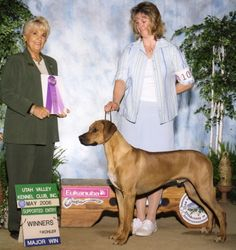 Utah Valley Kennel Club 2006