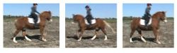 Canter Schooling