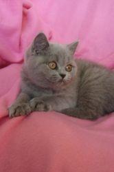 Nina, 12 weeks old