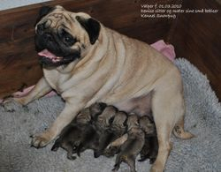 Denise with all her babies