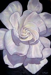 Gardenia Blossom   I/D 304C