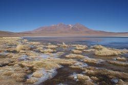 Altiplano, Bolivia 43