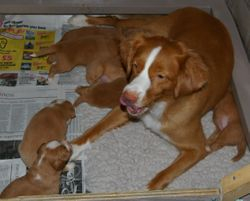 Sky with her babies