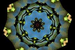 Kaleidoscope Lady Banksia Rose