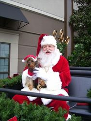 Santa and Rocky in Sleigh