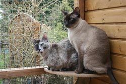 Tinka & Fanny