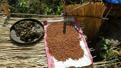Drying soy beans
