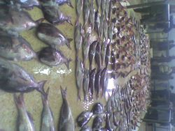 tantan fish market