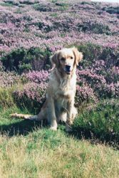 On the Moor as a Pup
