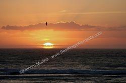 Sunrise with Bird