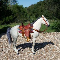 saddle set 91