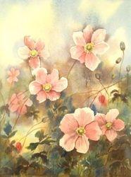Pink Anemonies