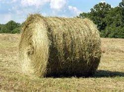 Large Round Hay Bales