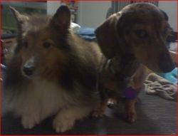 Harmony and Toby