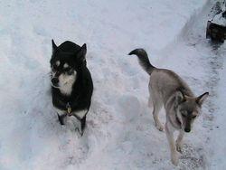 Maya & Sienna
