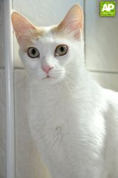 MEET LUCIA UNUSUAL LOOKING CAT NEEDING A LOVING HOME