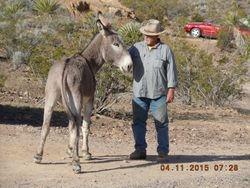 Scott Werrbach and a wild burro