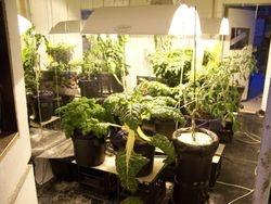 Great Grow Room