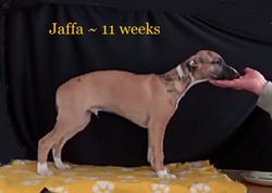 11 weeks