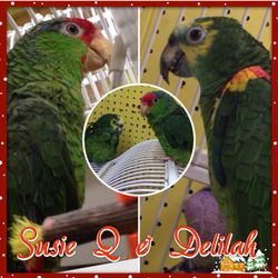 Susie Q and Delilah