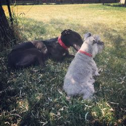 Rufus   with Otis
