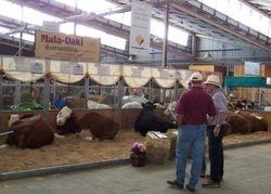 Mala-Daki display